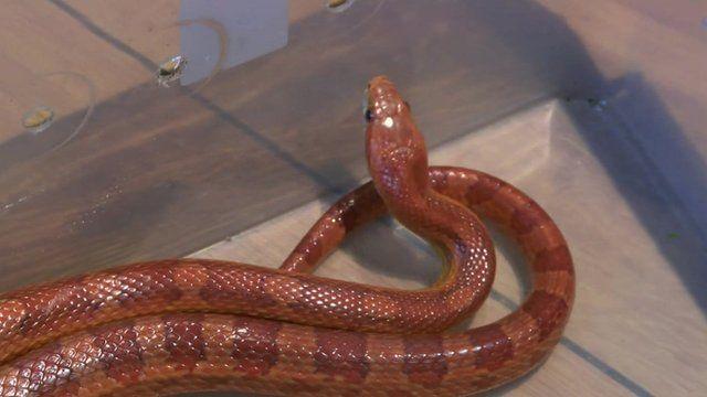Snake found in van in Chorley