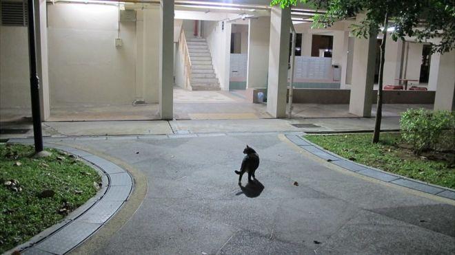 Community cat guardians Singapore