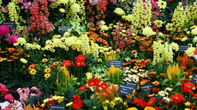 various flower exhibits