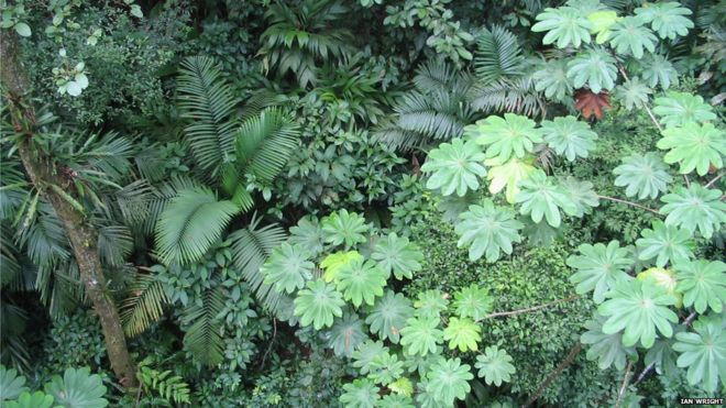 Rainforest canopy Panama & Clues to why leaves come in many sizes - BBC News