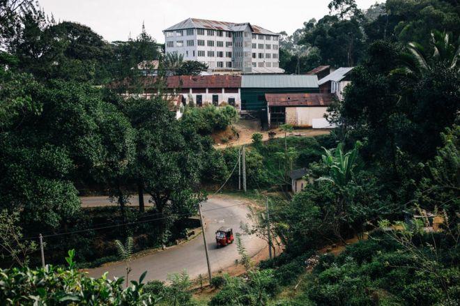 منظر لمصنع شاي