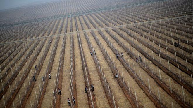North Korean workers at apple farm near Pyongyang, 10 April 2012