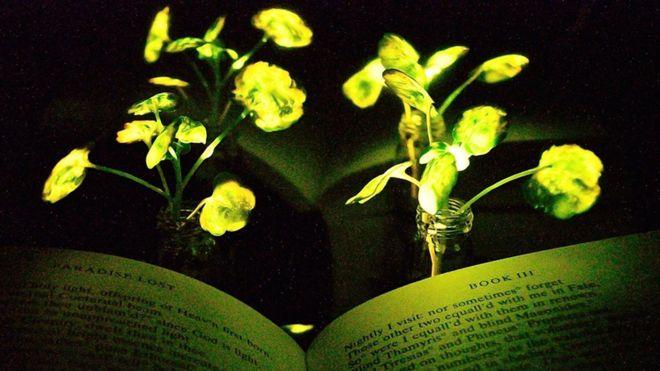 La planta luminosa que podría reemplazar a la lámpara de tu mesa de noche