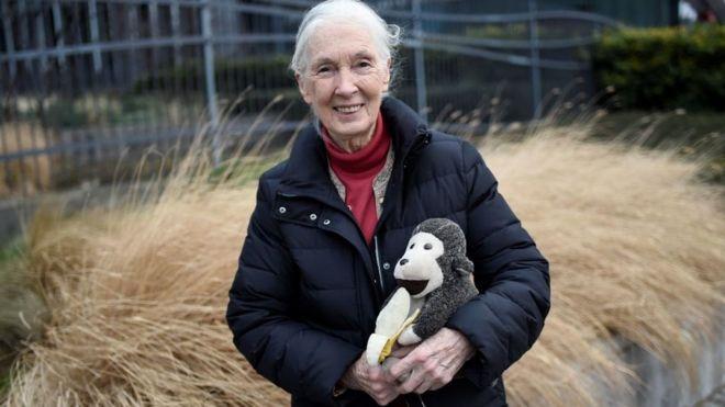 Jane Goodall com seu famoso boneco em 2018