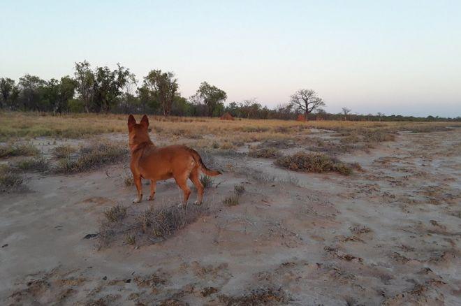 Perro mira el horizonte