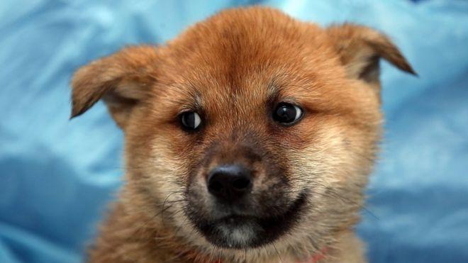 Chó được cứu từ trại nuôi ở Hàn Quốc