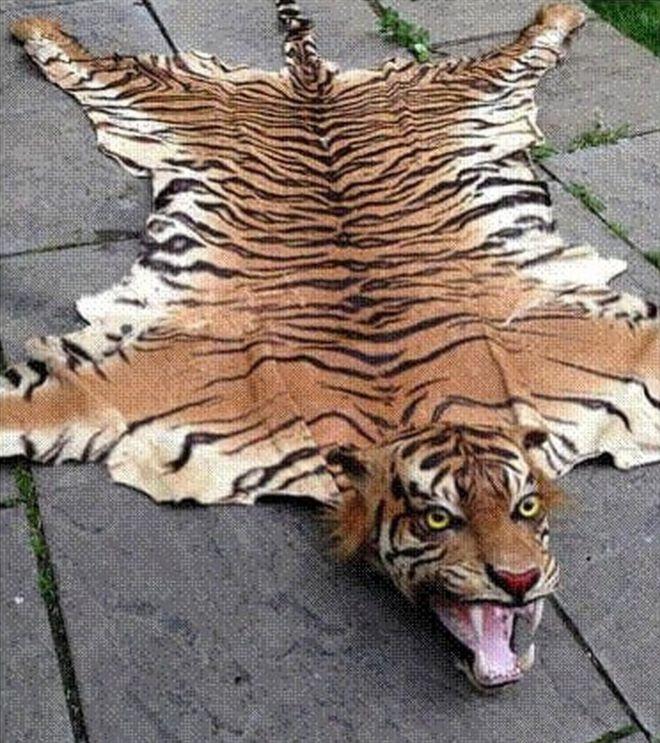 tiger skin rug - Animal Skin Rugs
