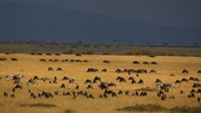 Gran migración anual