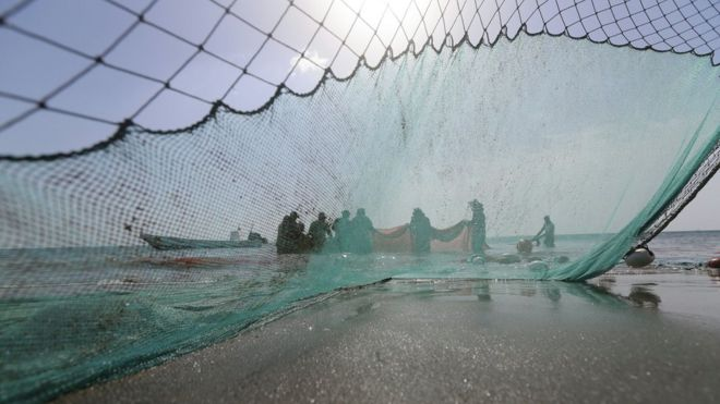 کشف لاشه صدها بچه کوسه در خلیج فارس