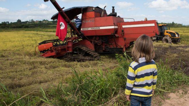 Menino observa colheita de arroz orgânico pelo MST em Nova Santa Rita (RS)
