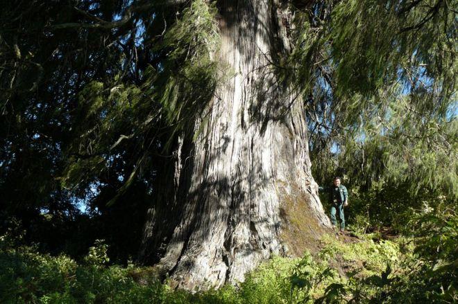 Árvore no Butão