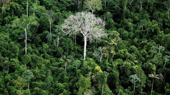 Tree-tops in the Amazon rainforest in the Amazon basin, Brazil, June 2012 Getty images