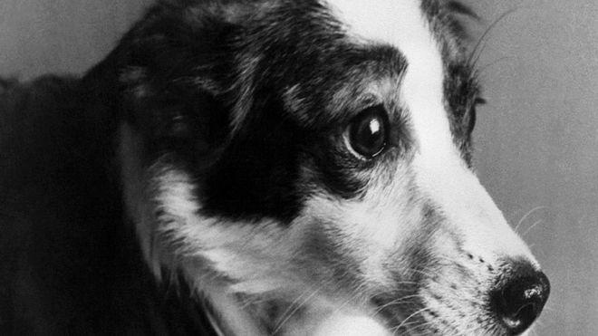 أحد الكلاب الفضائية Alamy