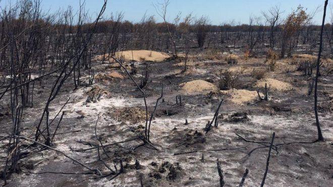 'بیش از ۲۰۰ هکتار' از جنگل میانکاله سوخته است