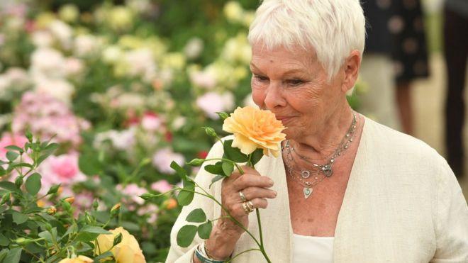 Dame Judi Dench holds a rose