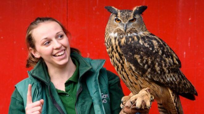 Max the eagle owl