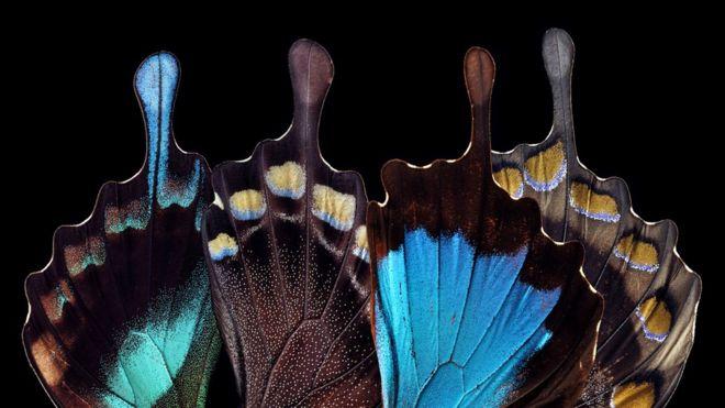 Qué es Teslagram, el innovador método inspirado en las alas de mariposa