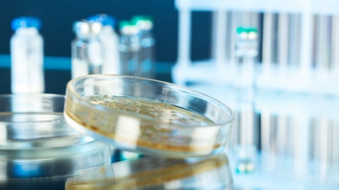 Placa de Petri