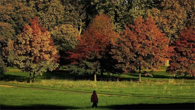 Person walking through Hyde Park, London (Getty Images)