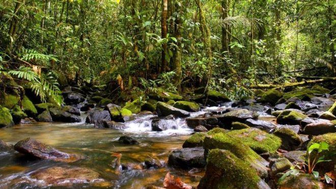 Suspenden el polémico decreto del gobierno de Brasil que abría a la minería una valiosa reserva de la Amazonía
