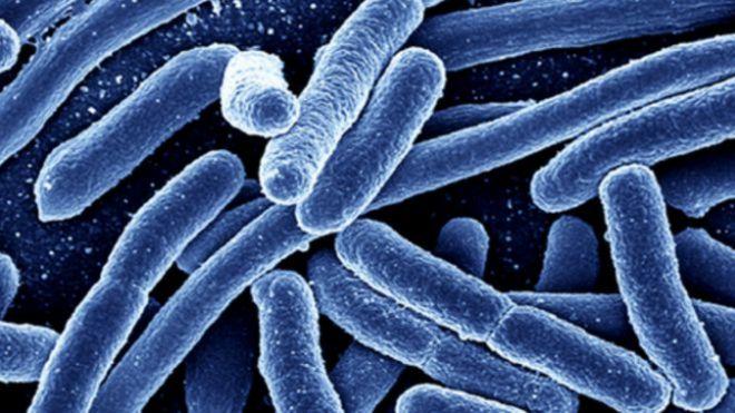 เชื้อแบคทีเรียอีโคไล (Escherichia coli / E. coli) พบได้ในลำไส้ของคนและสัตว์โดยหลายสายพันธุ์ไม่เป็นอันตราย