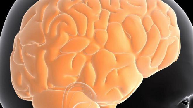 人类的大脑为什麽那麽大?
