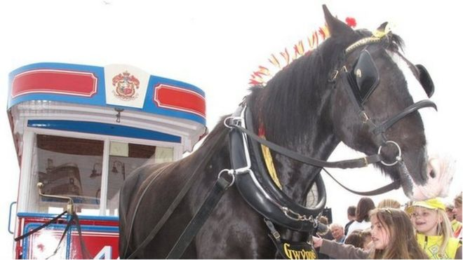 They're back. Horse trams return with limited service