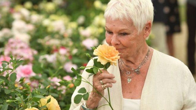 مهرجان زهور تشيلسي