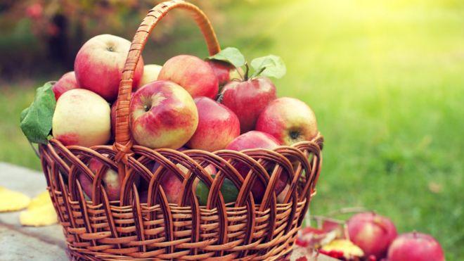 Elmalar depoda altı ay nasıl dayanıyor?