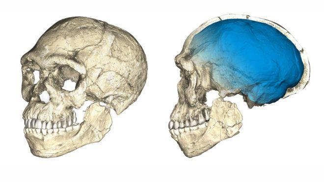 Reconstrução do primeiro crânio de Homo sapiens, de Jebel Irhoud (Marrocos)