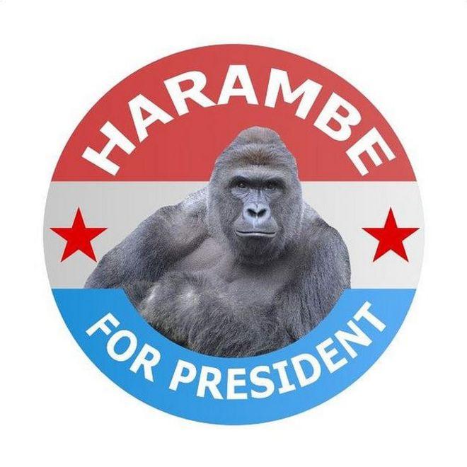 Gorrila For President