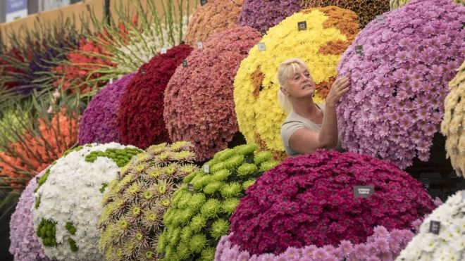 Worker preparing flower display