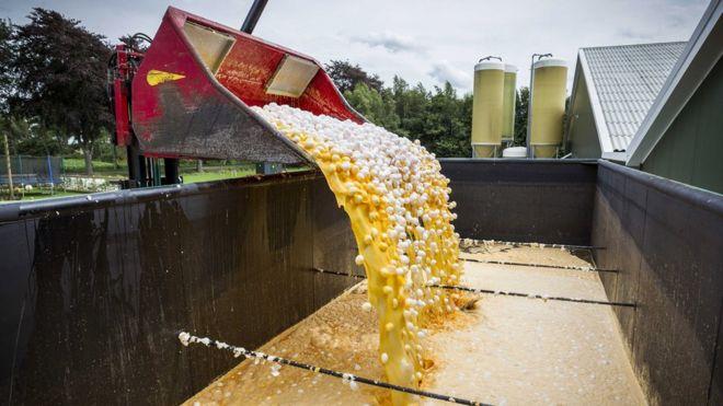 Millones de huevos han sido destruidos por estar contaminados por el pesticida