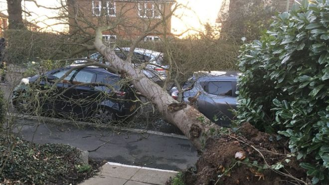 Cars crushed by tree