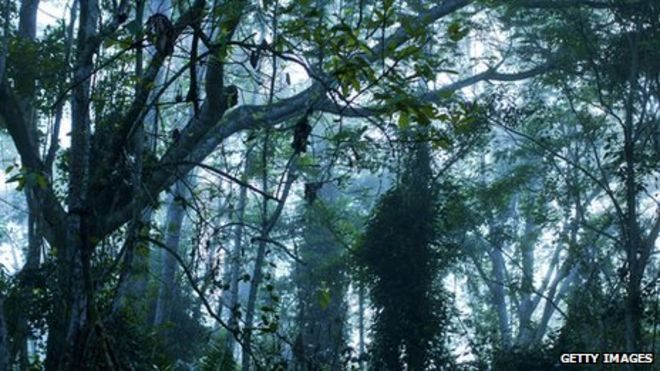 Deforestation in Africa's Congo Basin rainforest slows - BBC News
