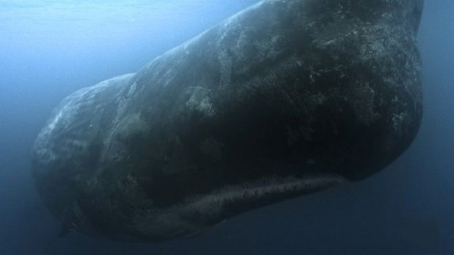 was moby dick a whale