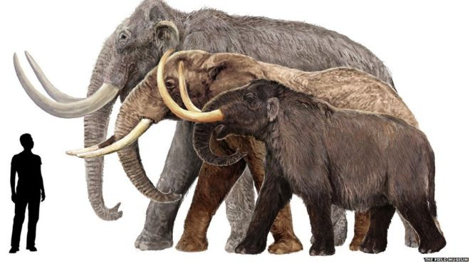 In pictures: Mammoths of the ice age - BBC News