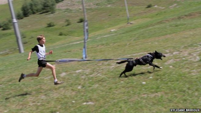 canicross dog