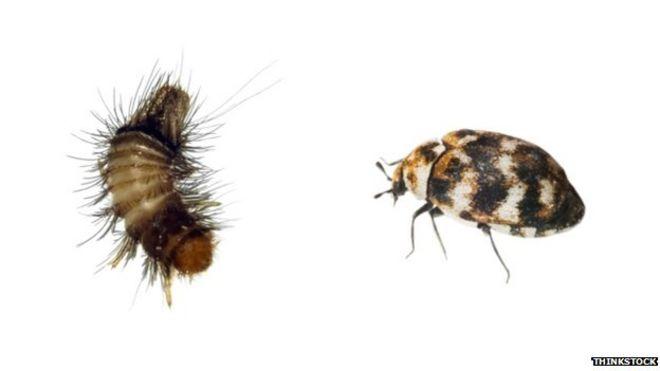 House bugs images uk