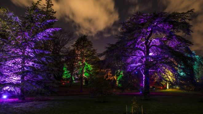 Show to light up Royal Botanic Garden in Edinburgh BBC News