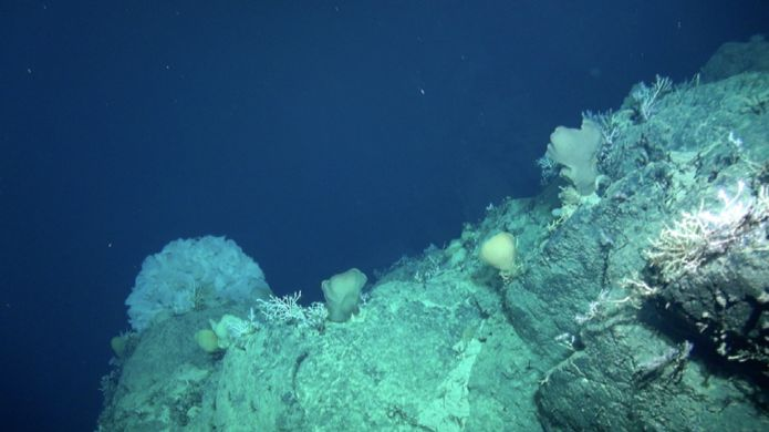 https://ichef-1.bbci.co.uk/news/695/cpsprodpb/4C3E/production/_95281591_seamount-cliff.jpg