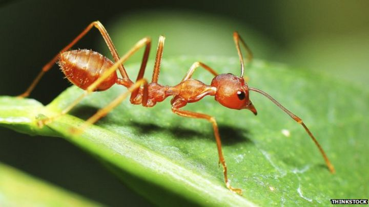 Are all the ants as heavy as all the humans BBC News