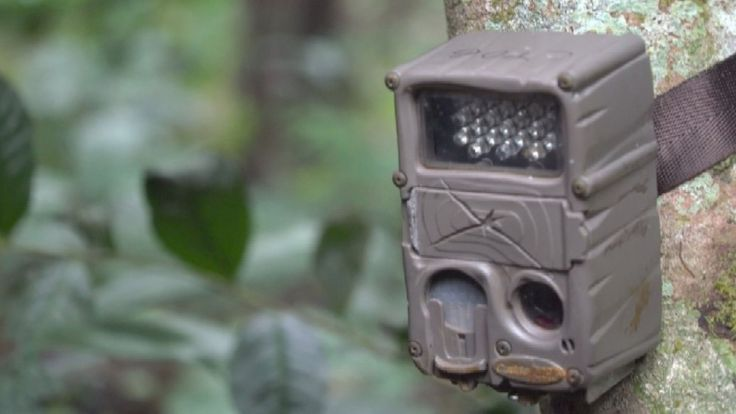 Camera trap attached to a tree