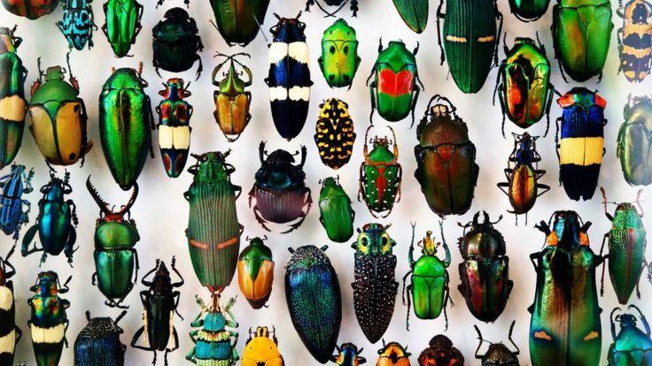 Insectos