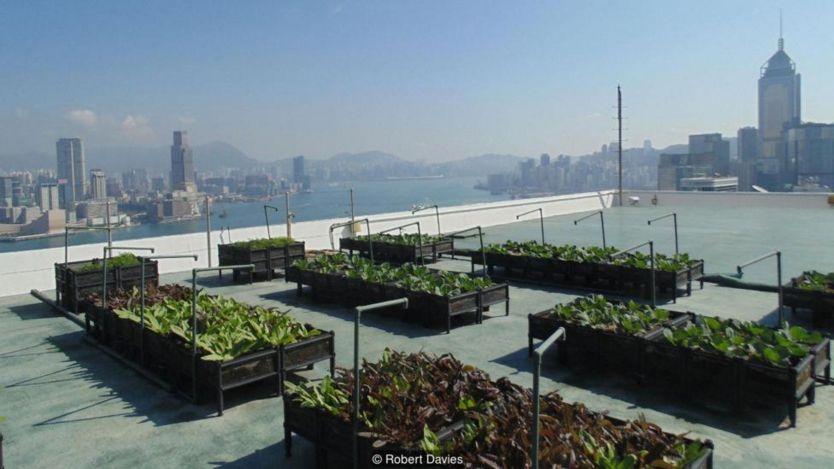 Trên nóc tòa nhà 39 tầng, Bank of America, là các khay trồng rau xanh