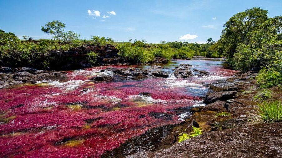 Колумбія, річка Каньйо-Крісталес