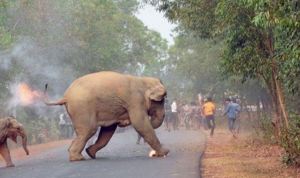 Dos elefantes en llamas escapan de unos mafiosos en India. (Crédito: Biplab Hazra / Concurso Fotográfico de Vida Silvestre de Sanctuary)