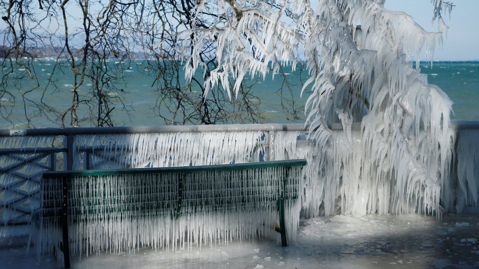 Árvore com folhas e galhos congelados