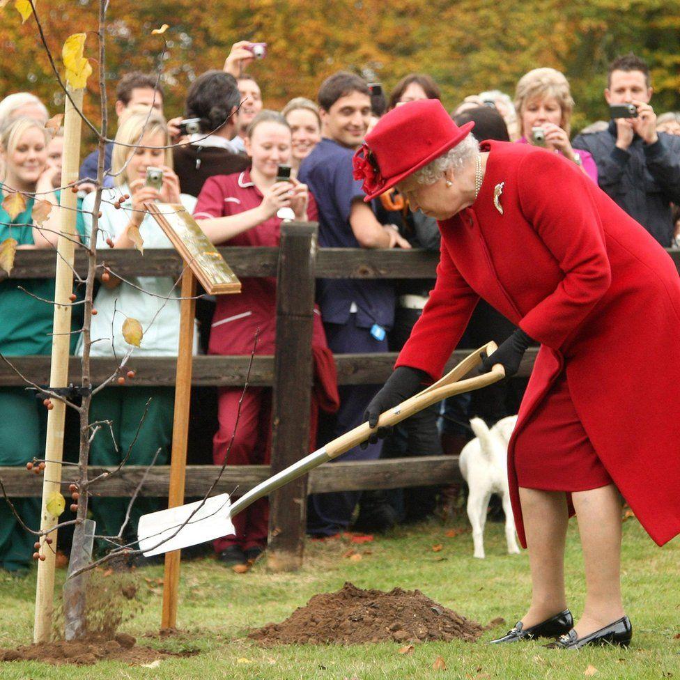 Image result for queen elizabeth 2 planting tree