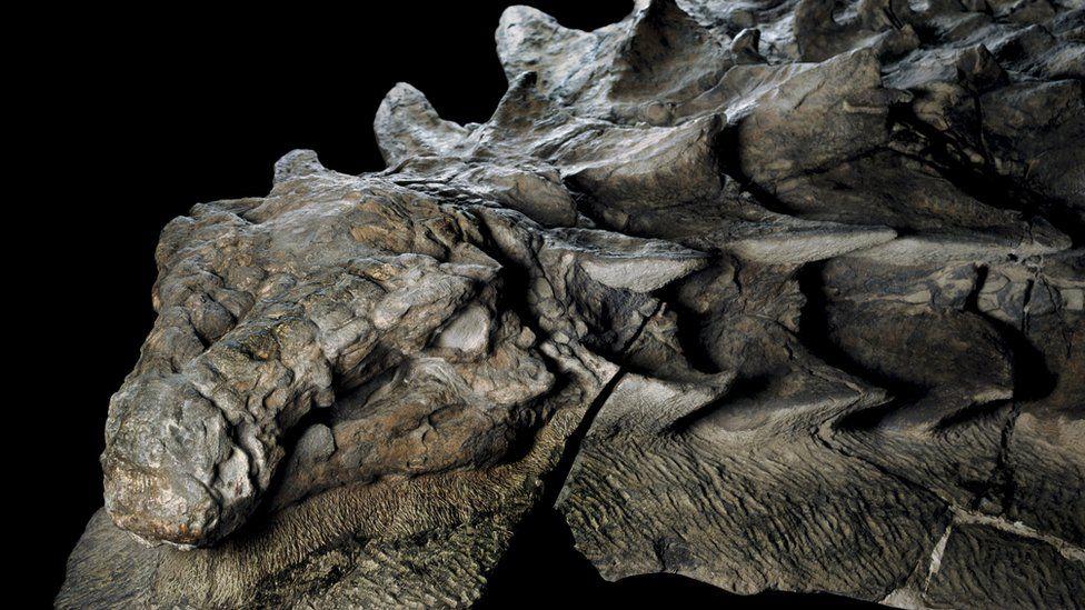 Resultado de imagen de fosil hallado en canada